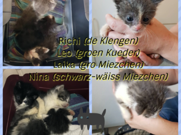4 Fellecher : Richi, Leo, Laika an Nina