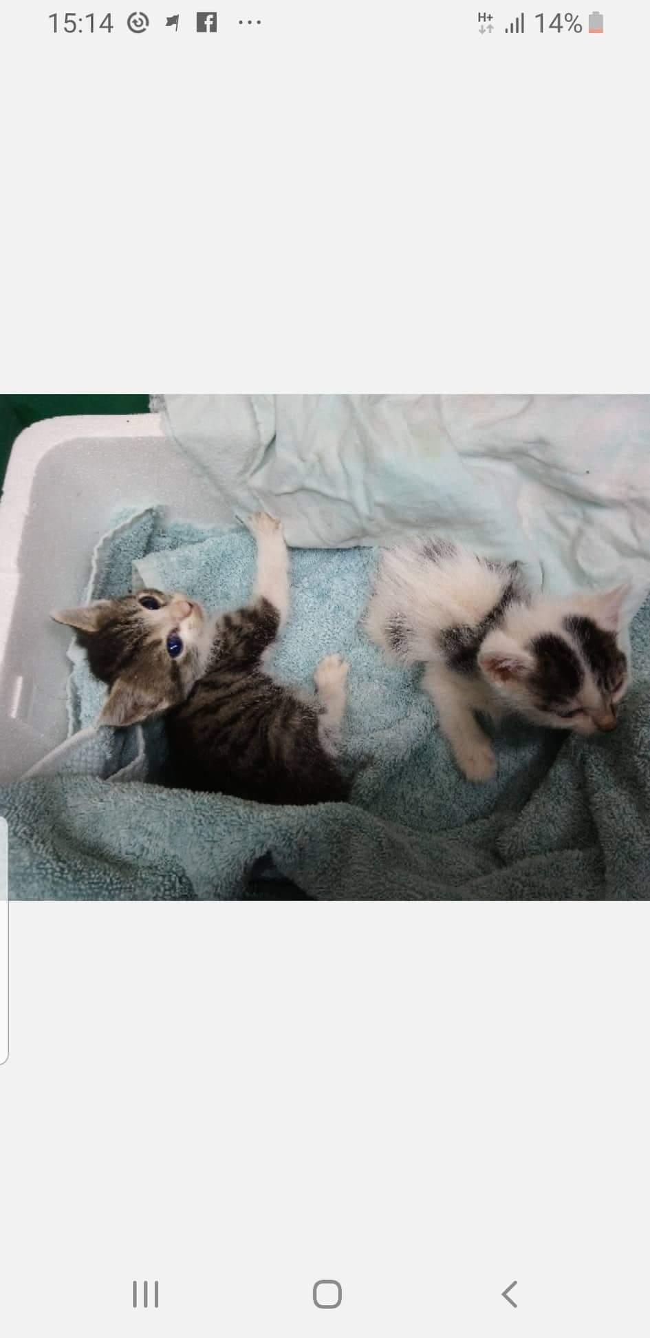 Milka & Kisu