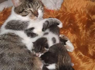 Kazemama Raya an hir 4 Babien Orella, Or'i, Oreo & O-Neil