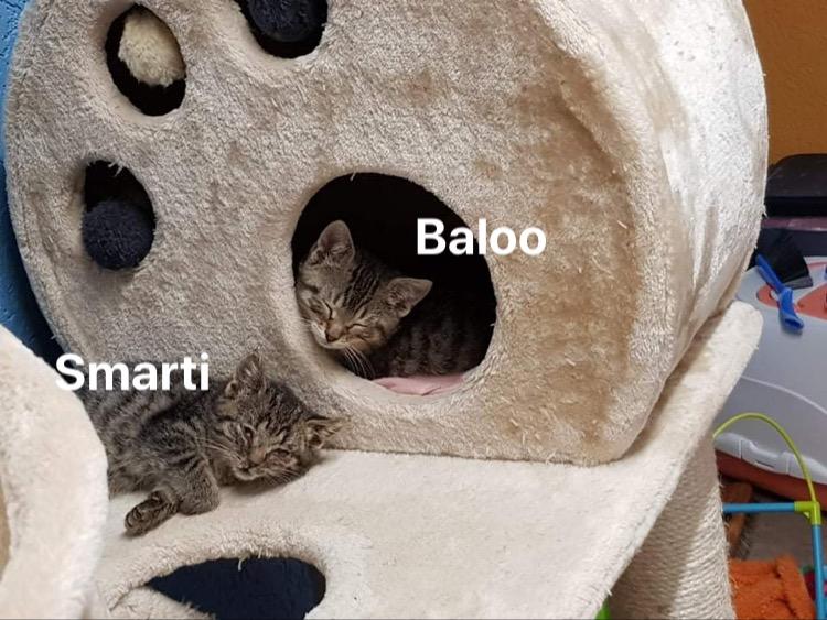 Balou & Merida